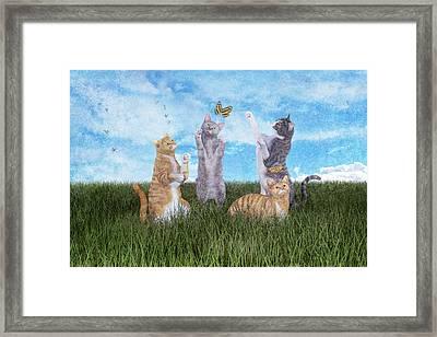 Playtime  Framed Print by Betsy Knapp
