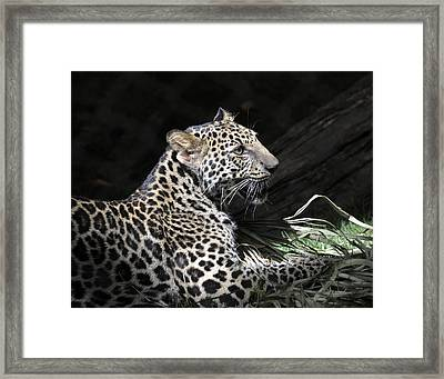 Playtime Framed Print by Keith Lovejoy