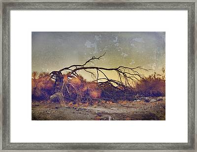 Pleading For Life Framed Print by Laurie Search