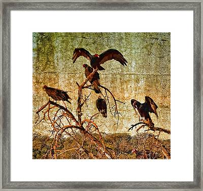 Pleasanton Vultures Framed Print