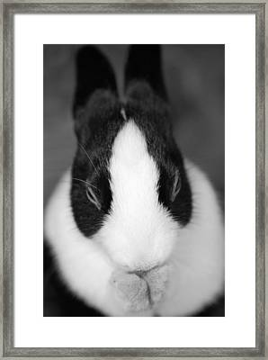 Please Be Carrots Framed Print by Fraser Davidson