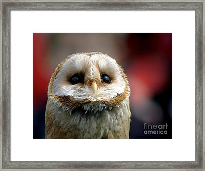 Please  Framed Print by Jacky Gerritsen