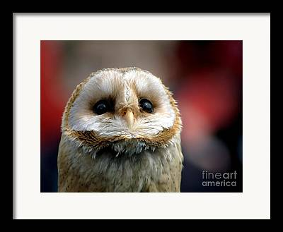 Baby Bird Photographs Framed Prints