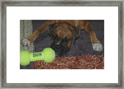 Please Play With Me Framed Print