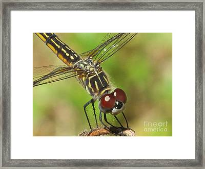 Pleased To Meet You Framed Print