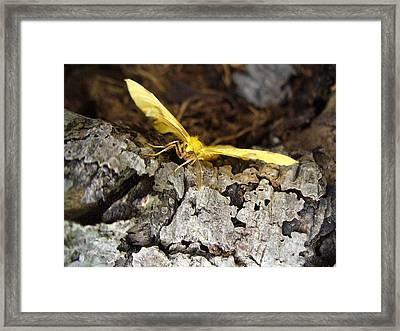 Pleased To Meet You Framed Print by Peggy King