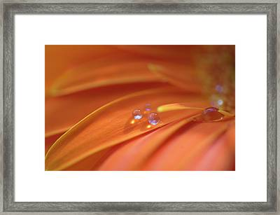 Pleasing To The Eye Framed Print