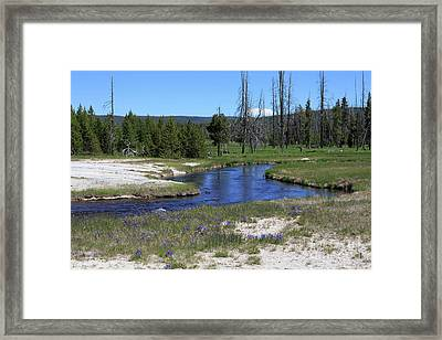 Pleated Gentians Beside Iron Creek In Black Sand Basin Framed Print by Louise Heusinkveld