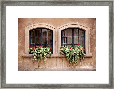 Plectranthus Coleoides And Red Pelargonium  Framed Print