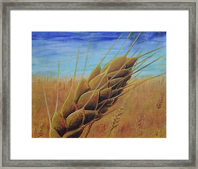 Plentiful Harvest Framed Print