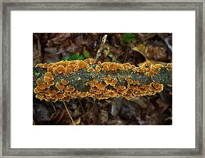 Plethora Of Trukey Tails For Thanksgiving Framed Print