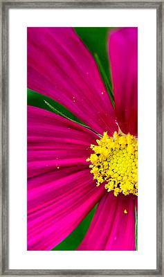 Plink Flower Closeup Framed Print
