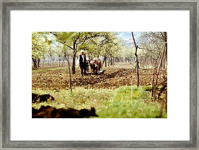 Ploughing In The Orchard Framed Print