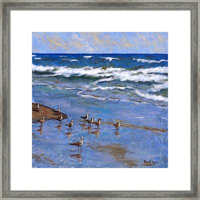 Plover Dance Framed Print by Brenda Williams