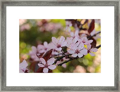 Plum Blossom Bokeh Party Framed Print by Connie Handscomb