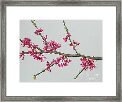 Plum Blossom Framed Print by Glenda Zuckerman