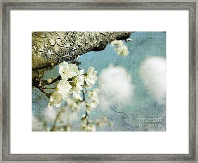 Plum Blossoms And Puffy Clouds Framed Print