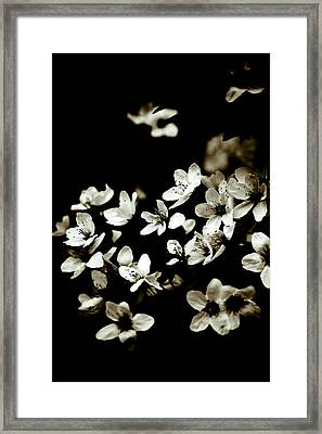 Plum Blossoms Framed Print by Frank Tschakert
