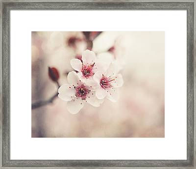 Plum Blossoms Framed Print by Lisa Russo