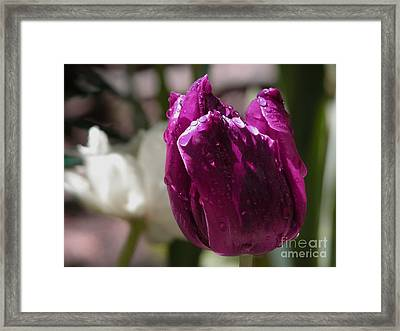 Plum Gorgeous Framed Print by Donna Stewart