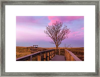 Plum Island Boardwalk With Tree Framed Print