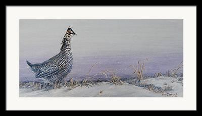 Prairie Chicken Framed Prints