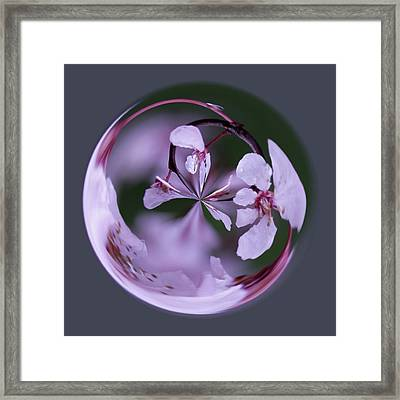 Framed Print featuring the photograph Plum Tree Orb by Bill Barber