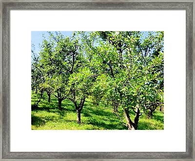 Plum Trees 1 Framed Print