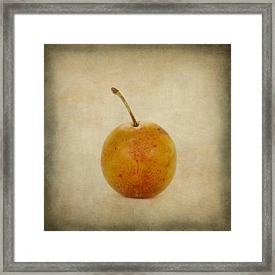 Plum Vintage Look Framed Print by Bernard Jaubert