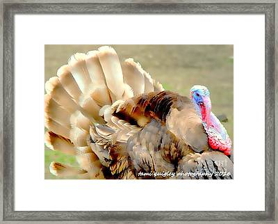 Plumage On Parade  Framed Print