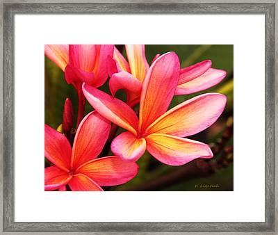 Plumeria - Pretty Pink Framed Print