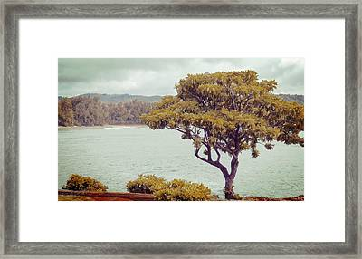 Plumeria At Rest Framed Print by JAMART Photography