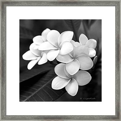 Plumeria - Black And White Framed Print by Kerri Ligatich