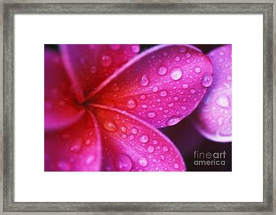 Plumeria Blossom Framed Print by Ron Dahlquist - Printscapes