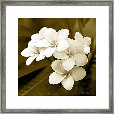 Plumeria - Brown Tones Framed Print