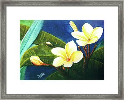Plumeria Flower # 140 Framed Print by Donald k Hall