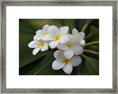 Plumeria - Golden Hearts Framed Print