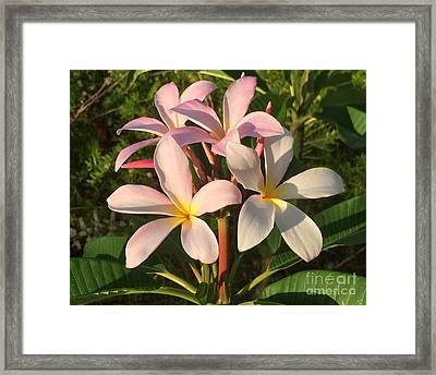 Plumeria Heaven Framed Print