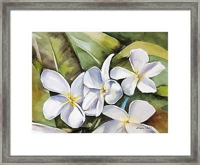 Plumeria II Framed Print