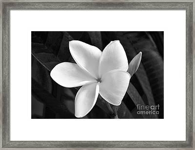 Plumeria In Monochrome Framed Print