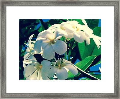 Plumeria In The Sun II - Edit Framed Print
