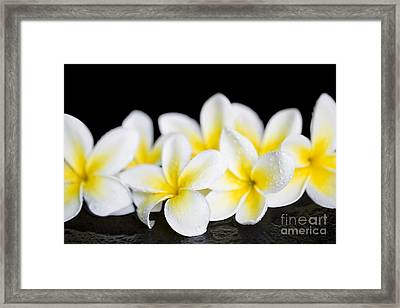 Framed Print featuring the photograph Plumeria Obtusa Singapore White by Sharon Mau