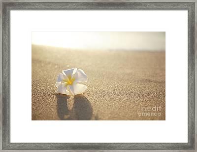 Plumeria On Beach I Framed Print by Brandon Tabiolo - Printscapes