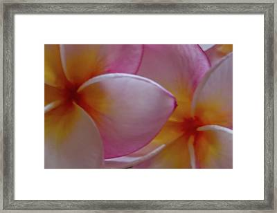 Framed Print featuring the photograph Plumeria Pair by Roger Mullenhour