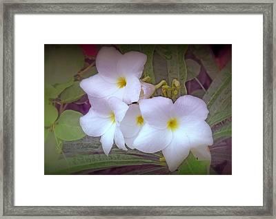 Plumeria Pudica Framed Print
