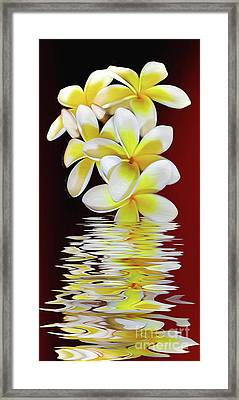 Plumeria Reflections By Kaye Menner Framed Print