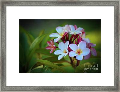 Framed Print featuring the photograph Plumeria Sunset by Kelly Wade