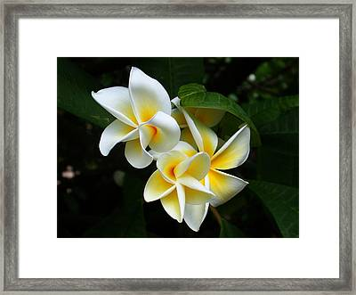 Framed Print featuring the photograph Plumerias by Gary Cloud
