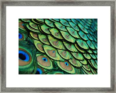 Plumes Framed Print by Lorenzo Cassina