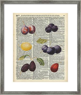 Plums Vintage Illustration Over A Old Dictionary Page Framed Print by Jacob Kuch